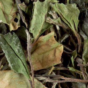 Pai Mu Tan – Thé Blanc